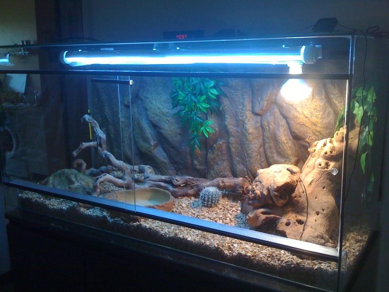 voici mon terrarium Img_0114