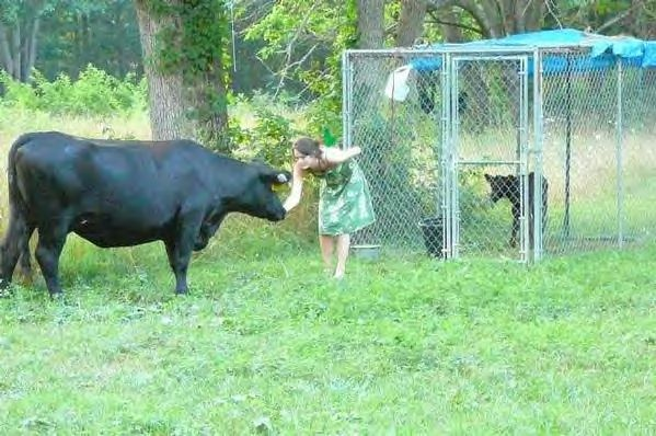 Our Cows Like Saraha11