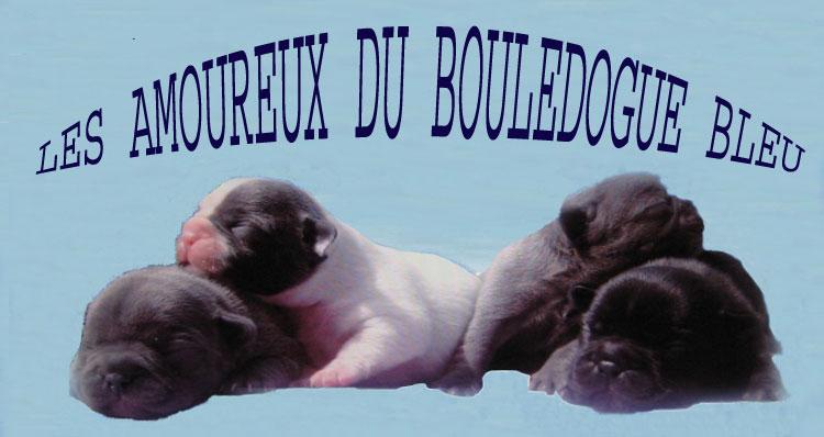 LES AMOUREUX DES BOULEDOGUES BLEUS