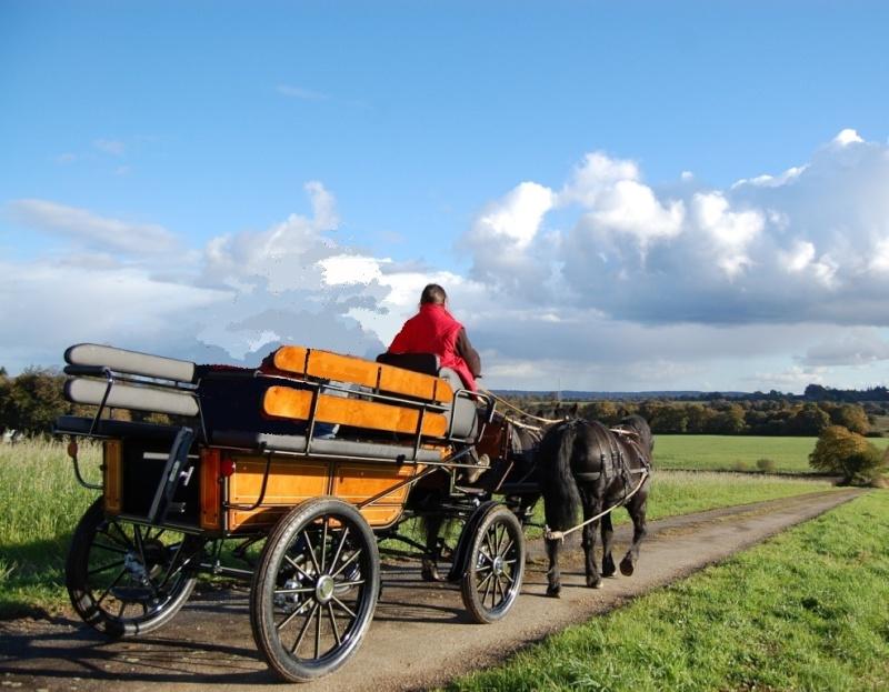 paire de chevaux merens cherche bon propriétaire Dsc_0015
