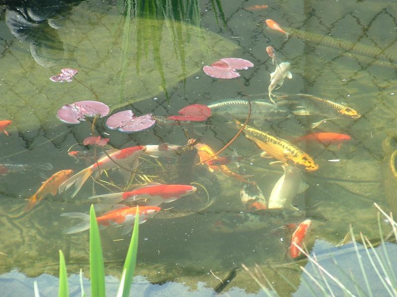Votre  photo pour Octobre 2009 Dscf0112