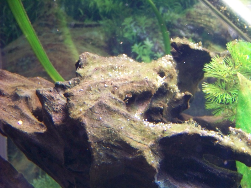Algues ?!   :mad0213: Ete20034