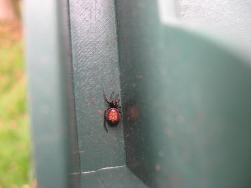 araignée à identifier 3 Img_1716