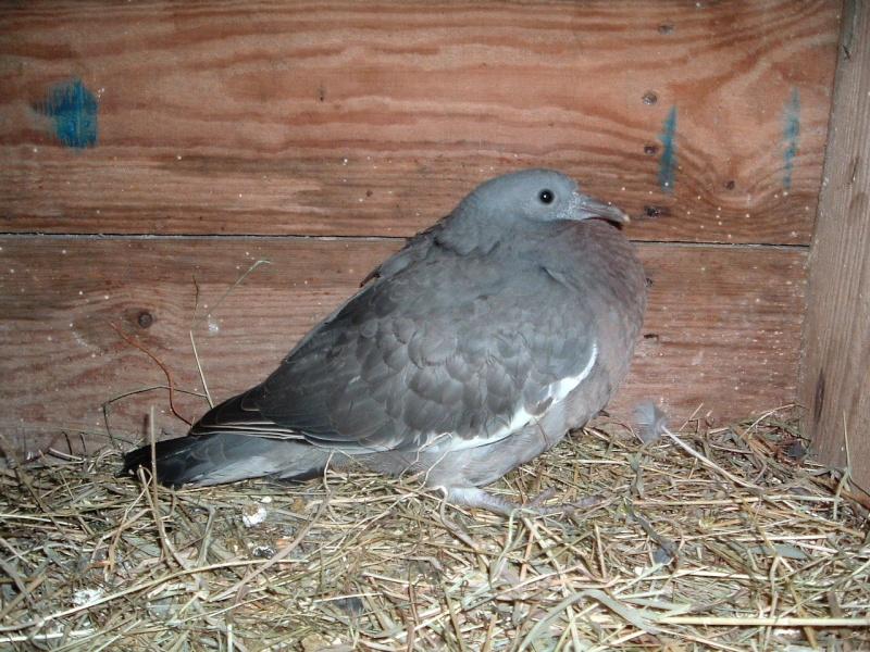 When should a woody fledgling start feeding itself? 2009_011