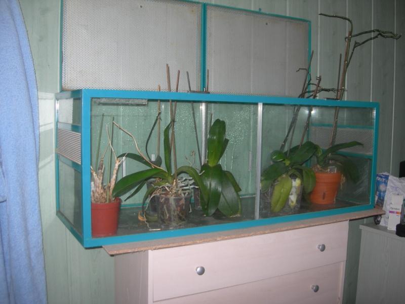 installation de mes orchidées pour cet hiver et nouvelle hampe pour un de mes phal Dscn0331
