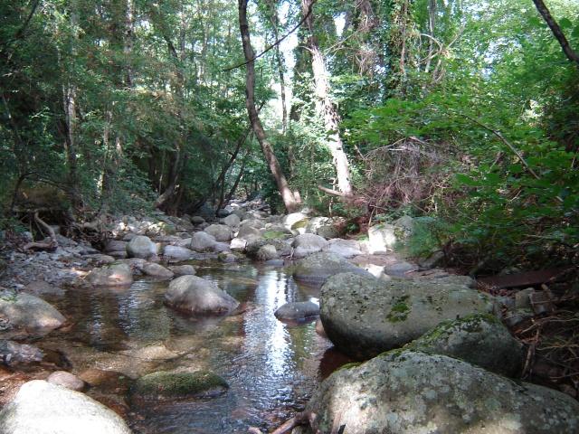 Photos de ruisseaux Cèvenols. Pache_19