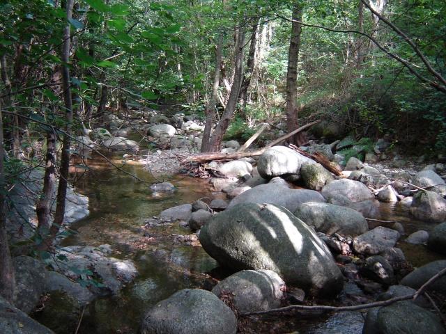 Photos de ruisseaux Cèvenols. Pache_20
