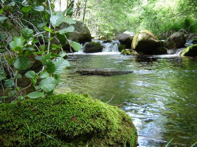 Photos de ruisseaux Cèvenols. Tarn_r10