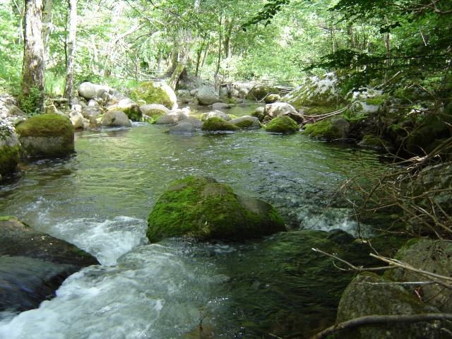 Photos de ruisseaux Cèvenols. - Page 2 Tarn_r11