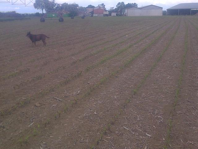 semis de maïs 2013  - Page 4 Img-2037