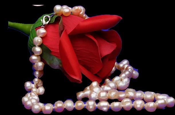 Fleurs: Les roses 0coug810