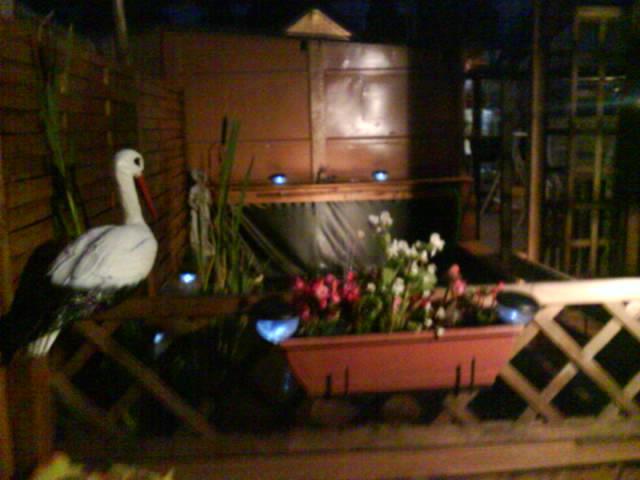 Votre photo pour Décembre 2009 Dsc00310