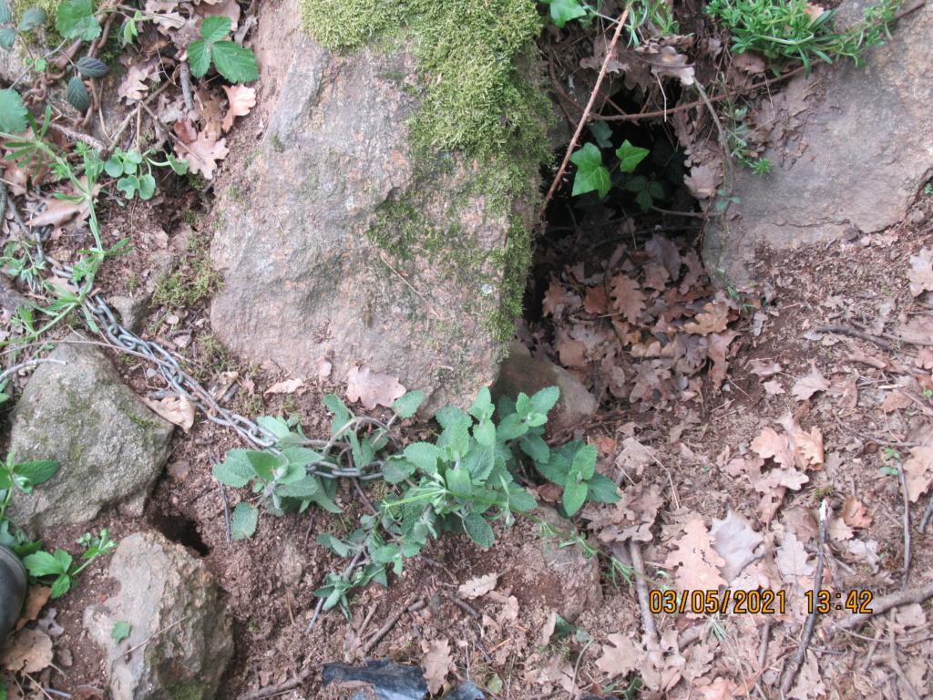 comptine : promenons nous dans les bois pendant  que ........ Img_1326