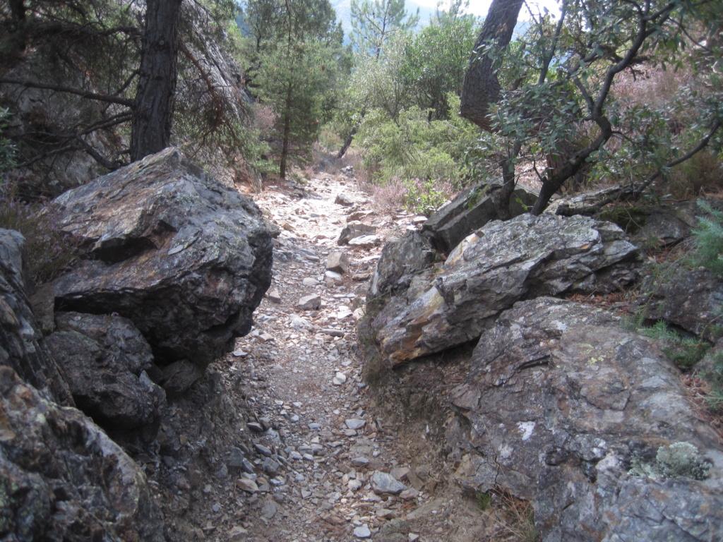 Chemin de Stevenson Img_3126