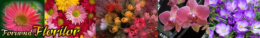 Forumul Florilor