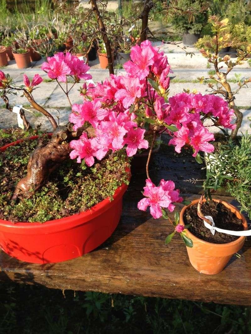 E' primavera e seppure piove sempre ci sono i primi fiori ed i primi colori Img_5010