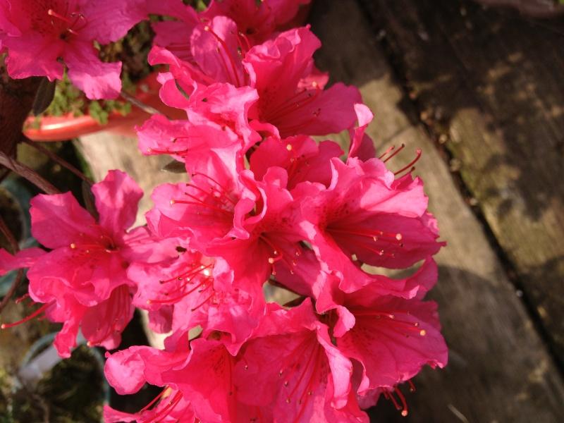 E' primavera e seppure piove sempre ci sono i primi fiori ed i primi colori Img_5011