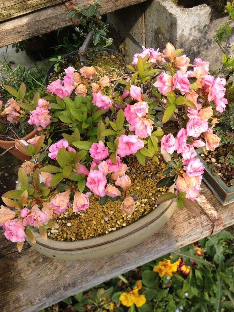 E' primavera e seppure piove sempre ci sono i primi fiori ed i primi colori Img_5012