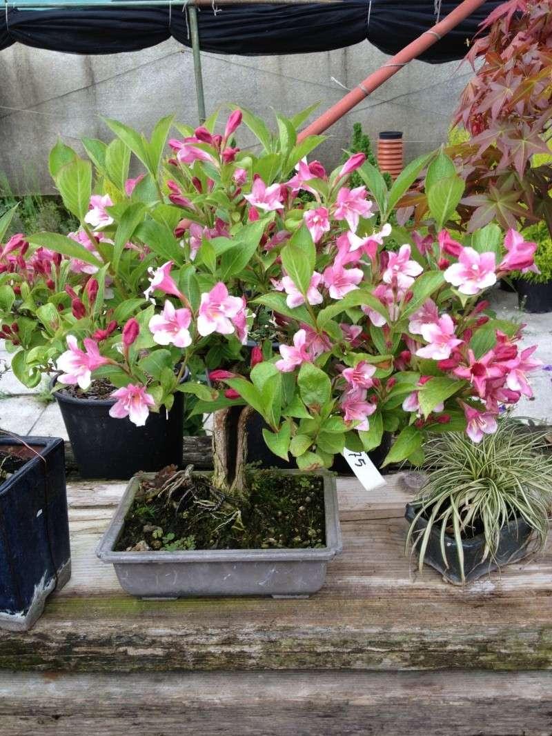 E' primavera e seppure piove sempre ci sono i primi fiori ed i primi colori Img_5110