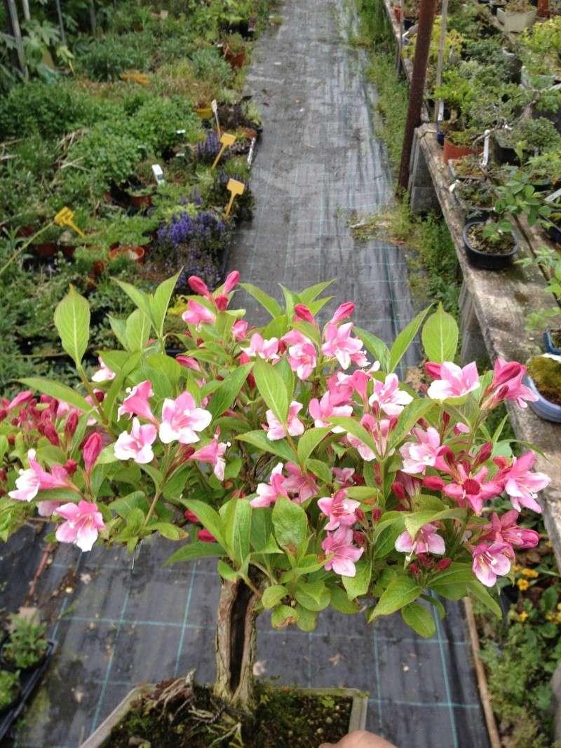 E' primavera e seppure piove sempre ci sono i primi fiori ed i primi colori Img_5111