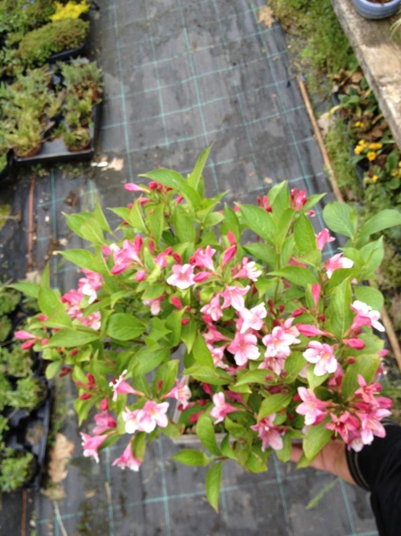 E' primavera e seppure piove sempre ci sono i primi fiori ed i primi colori Img_5113