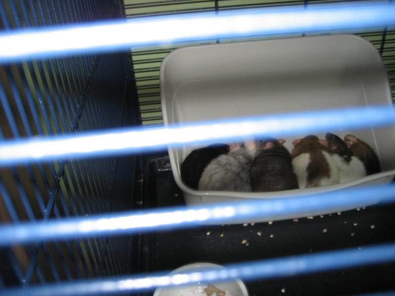 Lisa et ses 7 ratons Img_1510