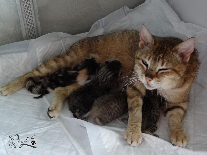 Notre Rencontre Forum 2013 - Ginger & ses bébés 07810