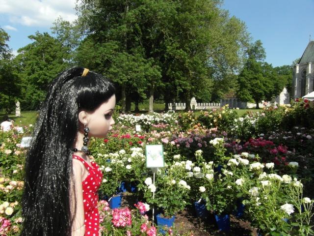 les journées de la rose à Fontaine Chaalis  dans l'Oise Sam_6512
