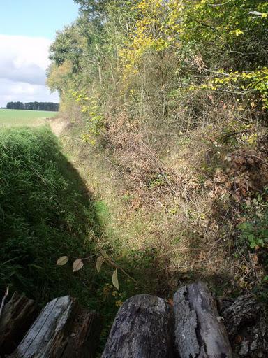 Photos du terrain (Autres photos) Dscf3013