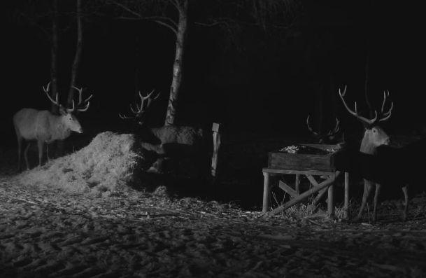 Wildtier-Livecams - Seite 28 25_12_10