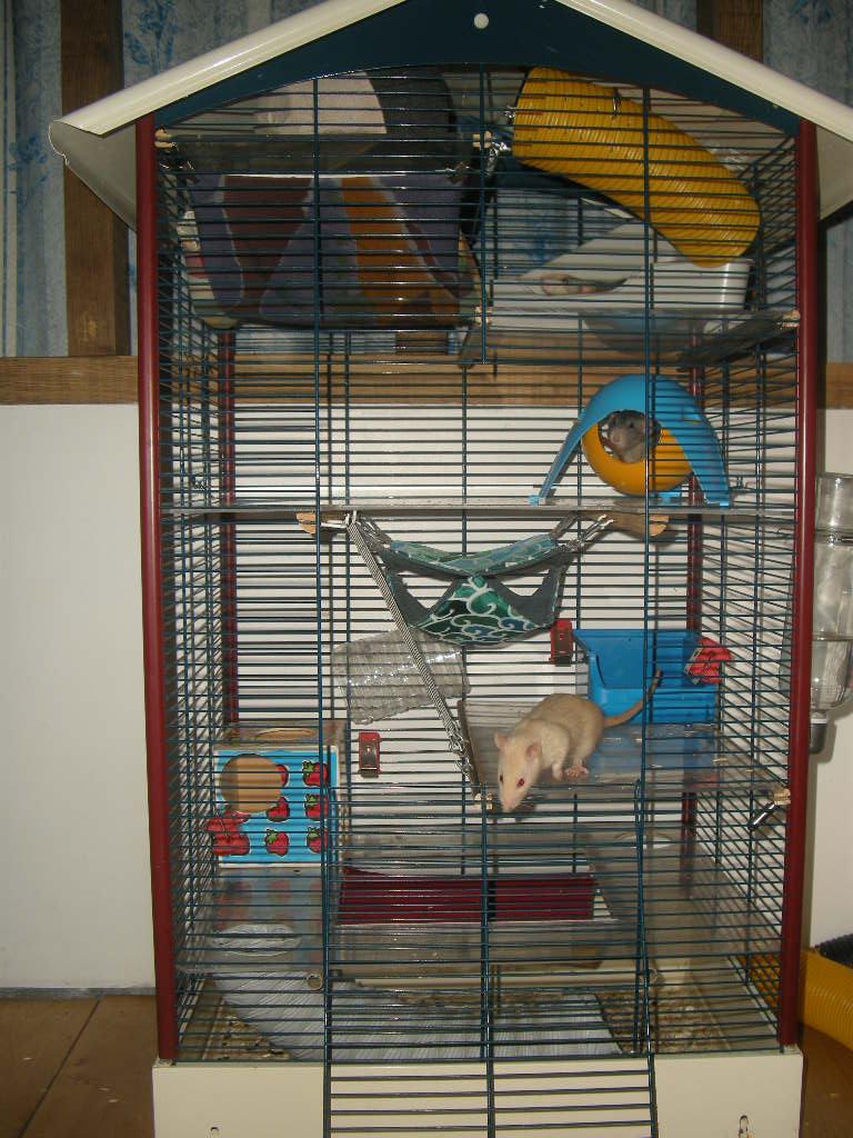 Ma cage me parrait trop vide. Dscn9514