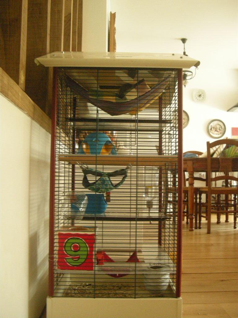 Ma cage me parrait trop vide. Dscn9515