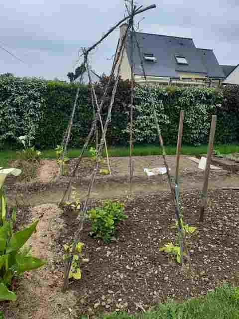 Le Jardin de Petit Louis 2020 - Page 5 20200417