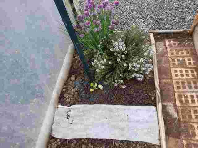 Le Jardin de Petit Louis 2021 - Page 4 20210532