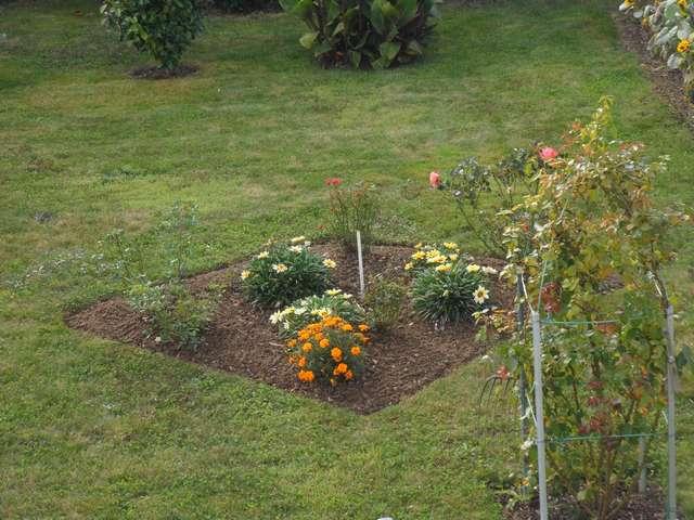 Jardin de Petit Louis 2019 - Page 11 Jardin14