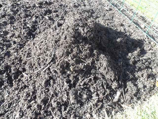 fumier de cheval ou compost mur - Page 2 Sam_4562