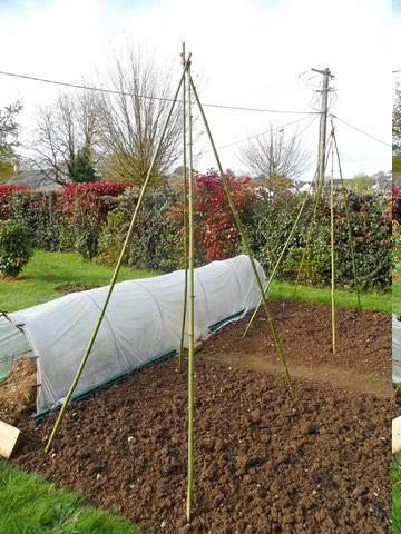L'osier au jardin : plessis - haie végétale - cabane - tipi - Page 3 Sam_4625
