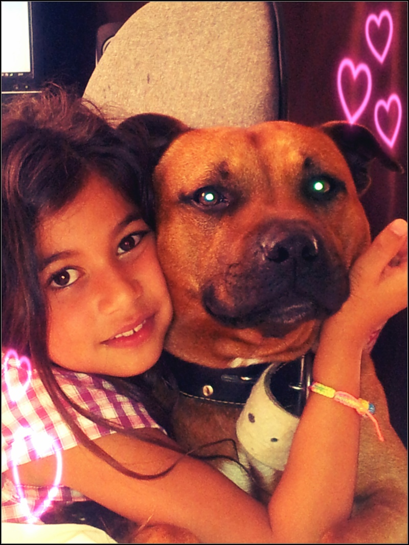 Hélyos, mon Staffordshire Bull-Terrier Emmahe10