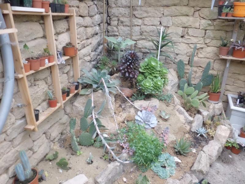 quelque succulentes Cimg0216