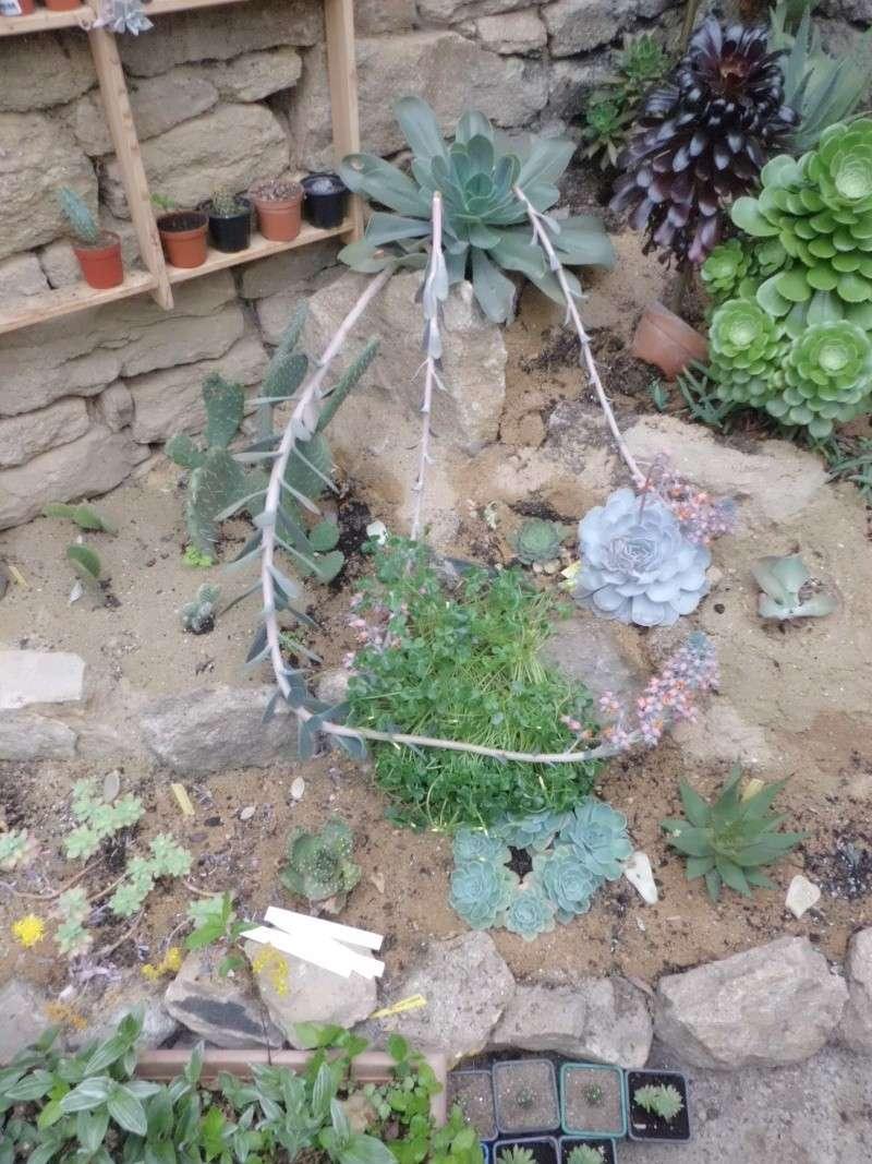 quelque succulentes Cimg0218