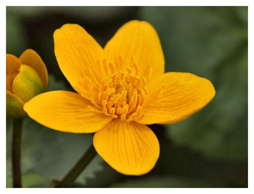 Pour Louis... Fleurs11