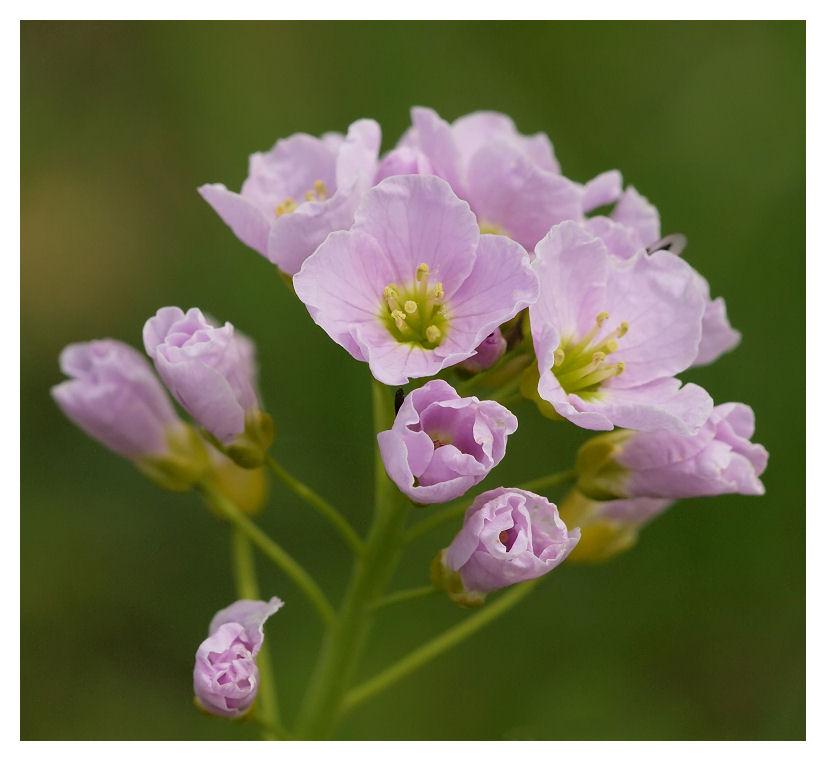 Pour Louis... Fleurs13