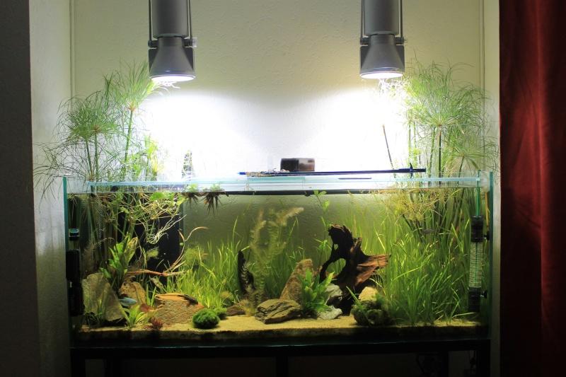 Nouvel aquarium 450 litres - Page 2 Img_4212