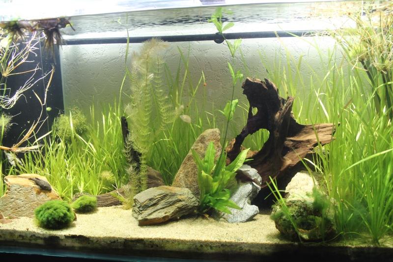 Nouvel aquarium 450 litres - Page 2 Img_4213