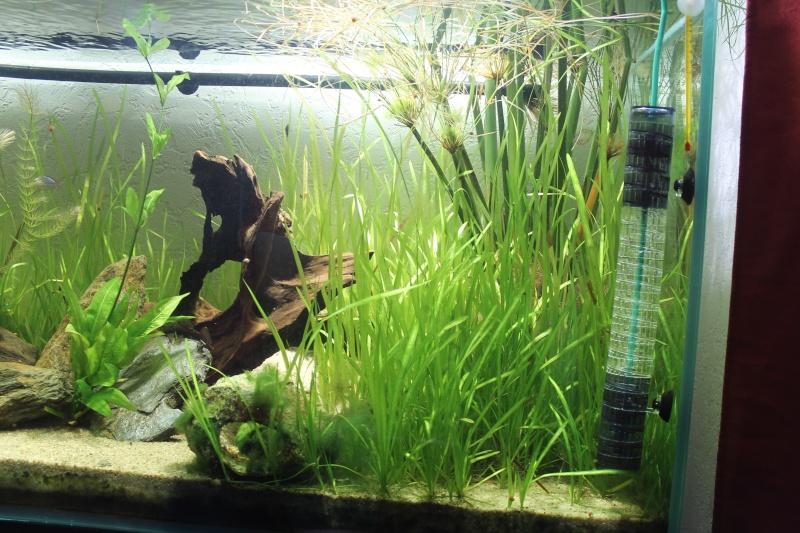 Nouvel aquarium 450 litres - Page 2 Img_4215