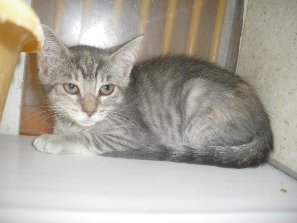 GABRIELA (chaton femelle tigrée) Imgp0021