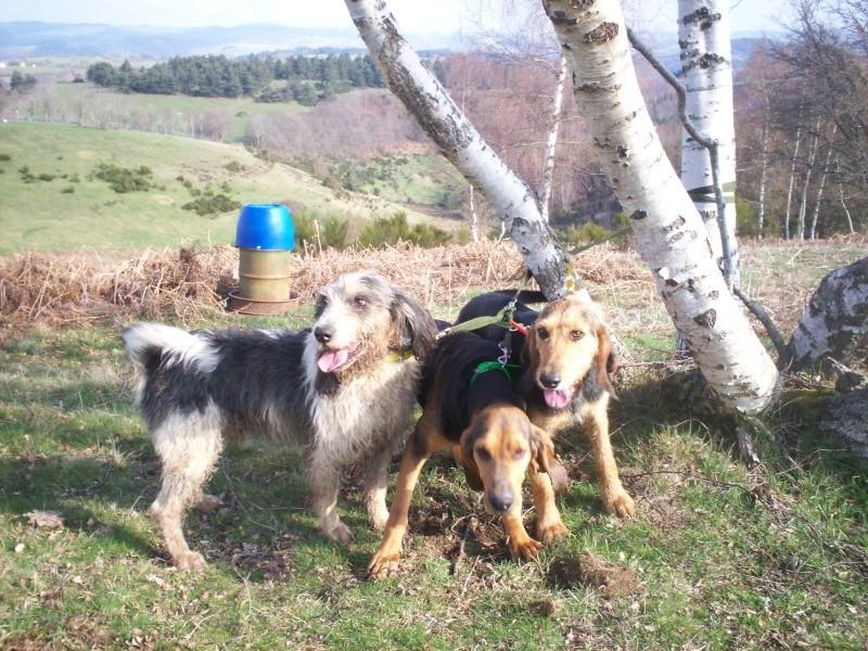 4 chiens disparus depuis le 18 AVRIL. 100_1010