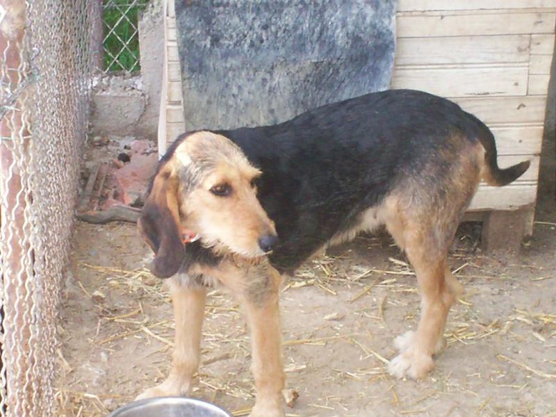 4 chiens disparus depuis le 18 AVRIL. 100_1011