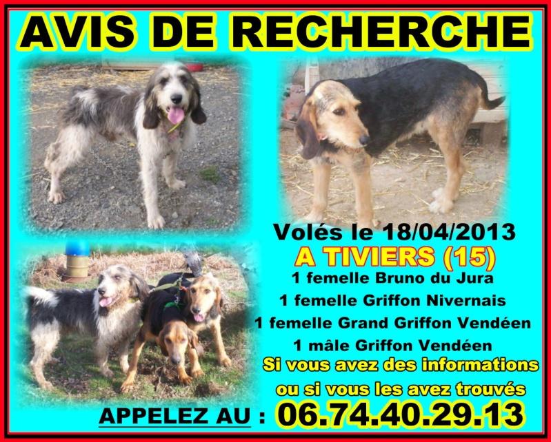 4 chiens disparus depuis le 18 AVRIL. Griffo10
