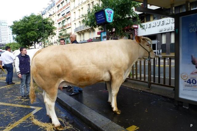 Lâcher de cochons devant la gare Montparnasse Manifp13